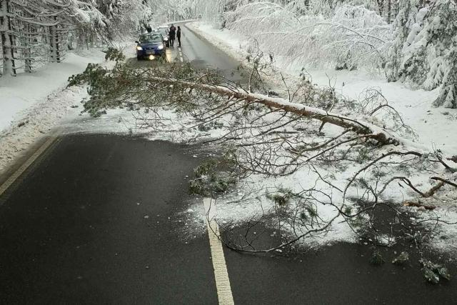 Popadané stromy likvidovali hasiči Pardubického kraje také v Hlinsku